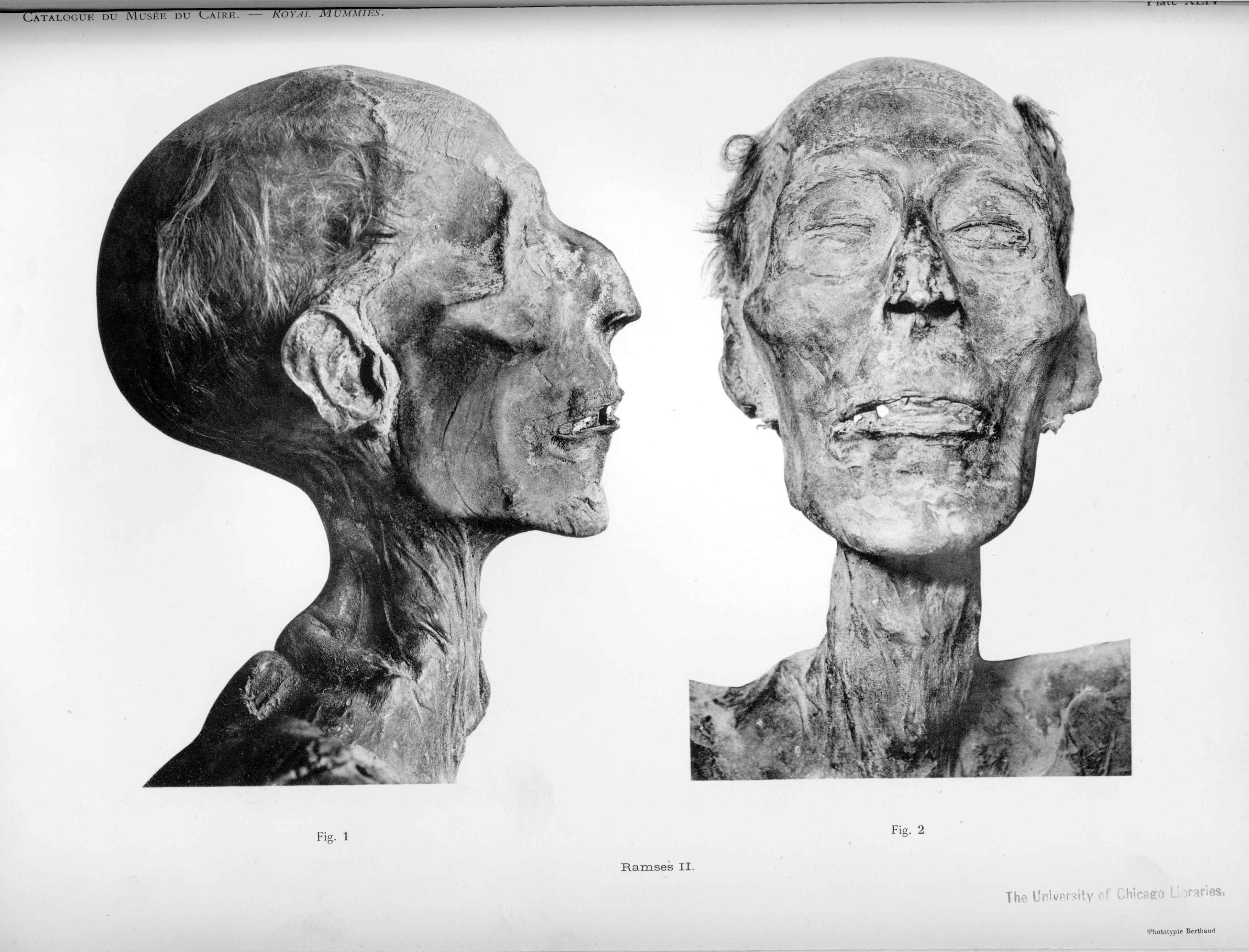 Mummy_of_Ramesses_II_b_large.jpg