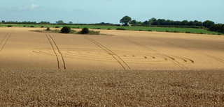 Spellow Hills Long barrow nr Langton, Spilsaby, Lincolnshire. Reported 8th  August.jpg